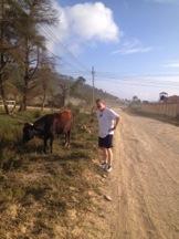 sully bull